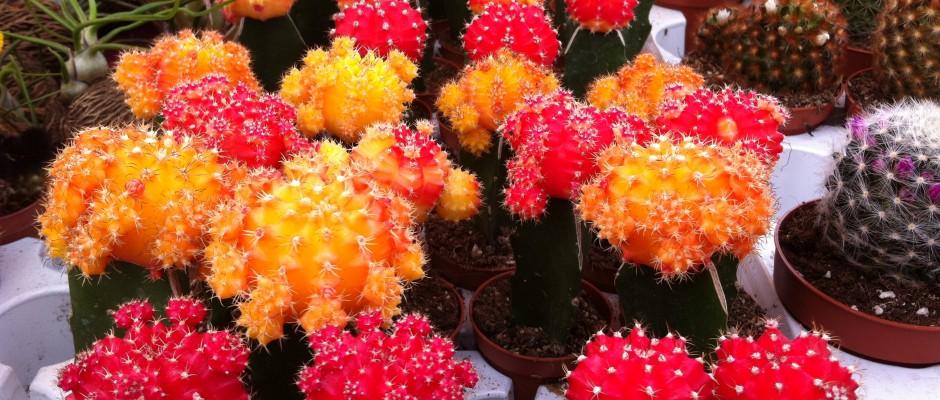 expo floricola