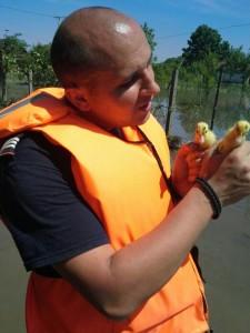 Salvare animale