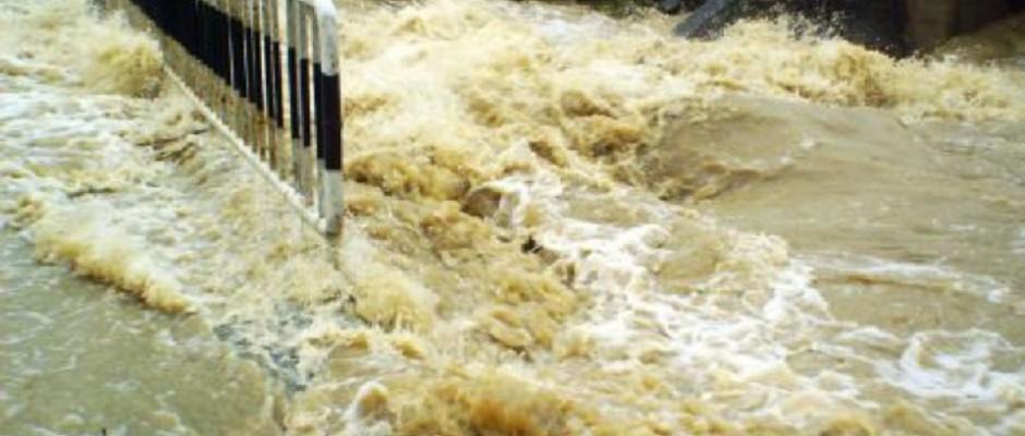 cod galben inundatii