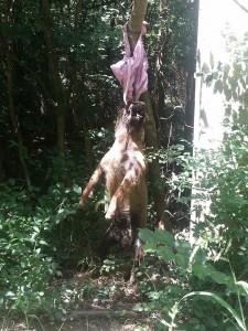 caine ucis