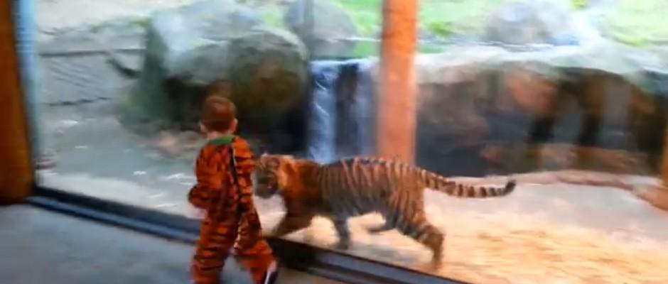 Copilul la Zoo