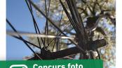 concurs foto biciclisti