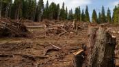 lemn-defrisari-mfax