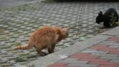 pisica turbata