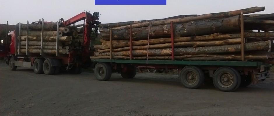 foto material lemnos